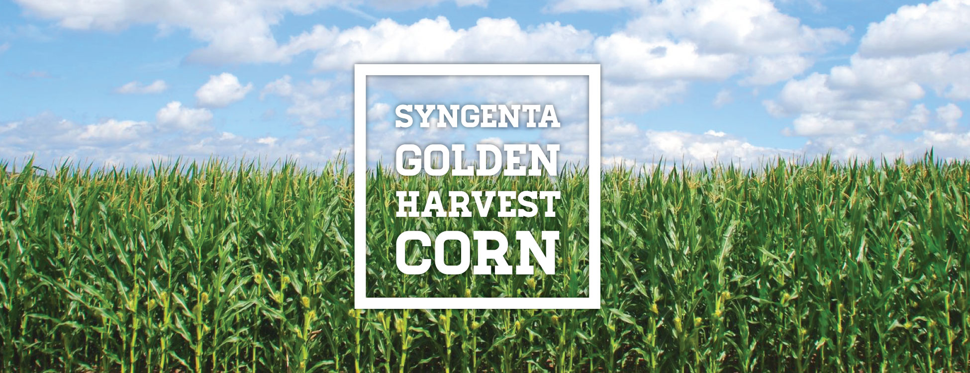 Syngenta Golden Harvest Corn