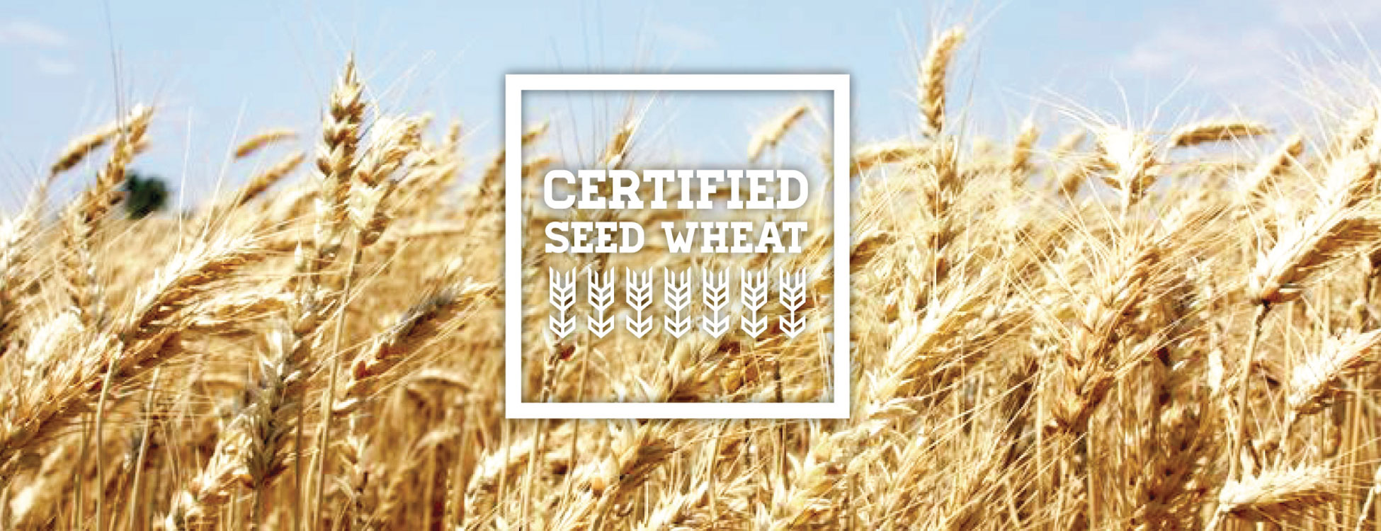 Midwest Seed Wheat