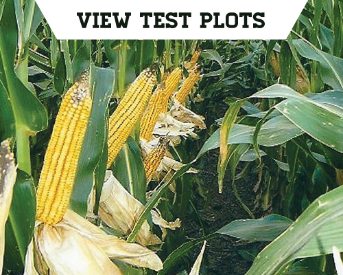 Kansas Test Plots